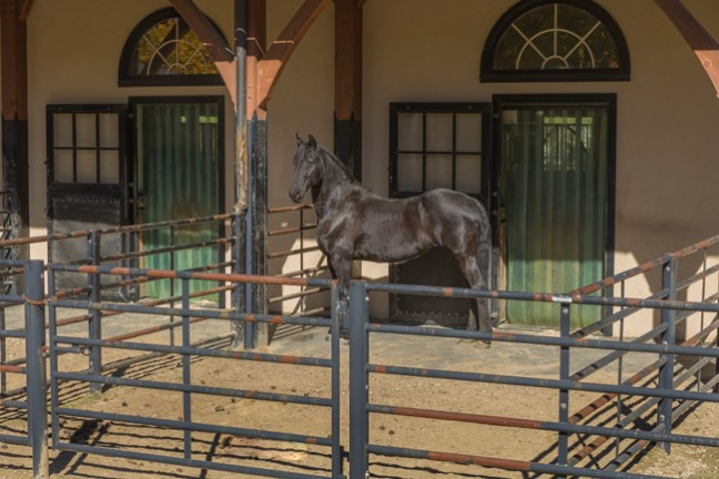 Horse in outdoor pen off the barn