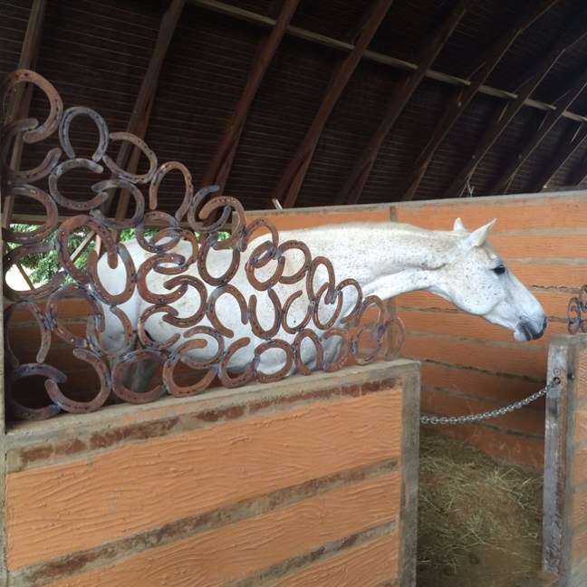 horse in the stall with horseshoe wall accents