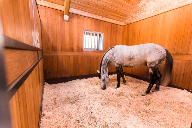 a well bedded stall