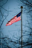 Framed by tree branches, the American flag flies against a deep blue sky.