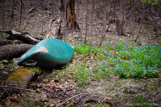 An overturned canoe rests atop a fallen tree trunk, while bluebells bloom around it.
