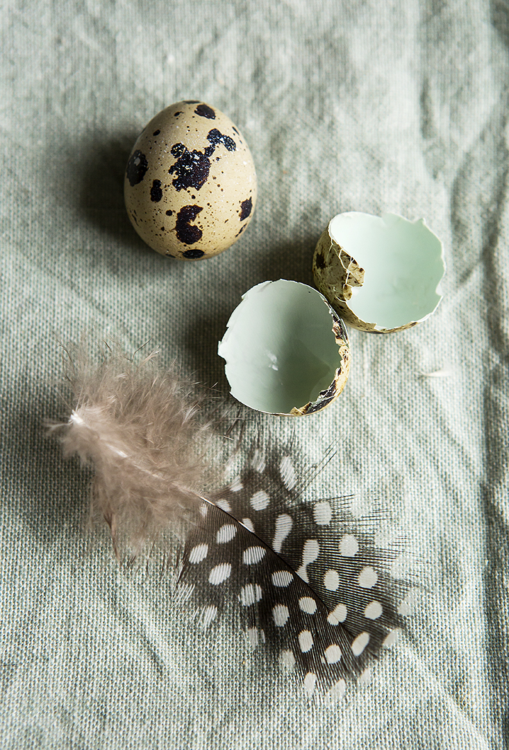 Quail Egg and shell | Happy Easter | Stacy Grant Food Photographer
