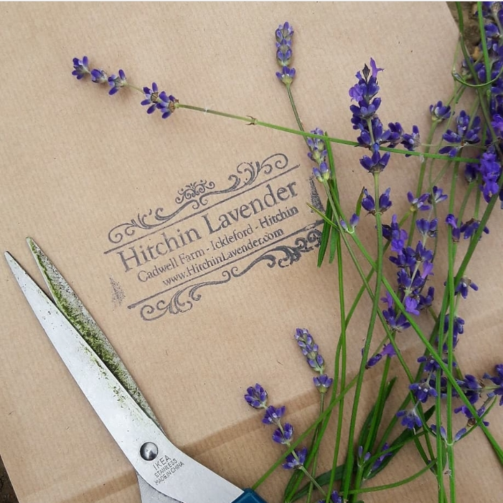 Hitching Lavender Fields | Stacy Grant | 52 Weekends