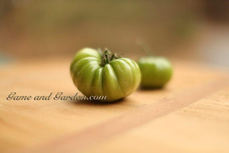 My Beautiful Green Tomatoes