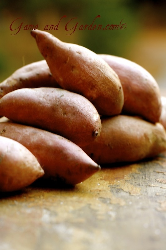 I LOVE sweet potatoes!