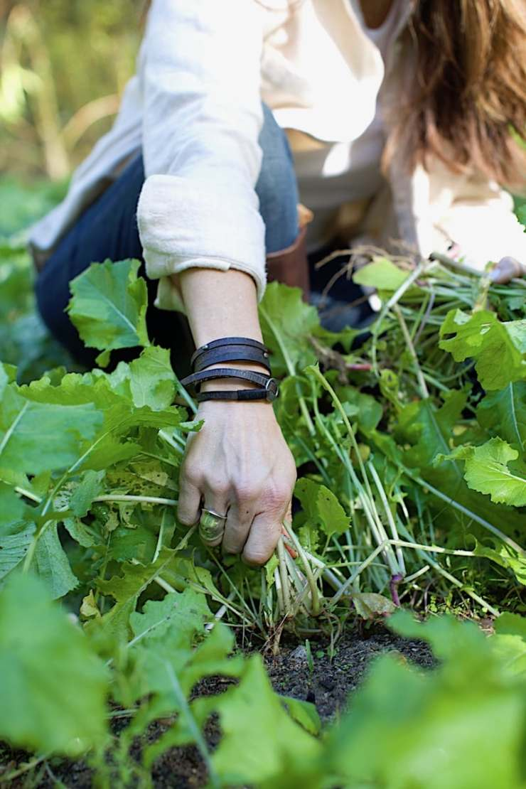 Thinning the greens helps them to grow more fully and healthy. To think collards, mustards, and turnips remove about 1/4 of the greens as consistently as possible.