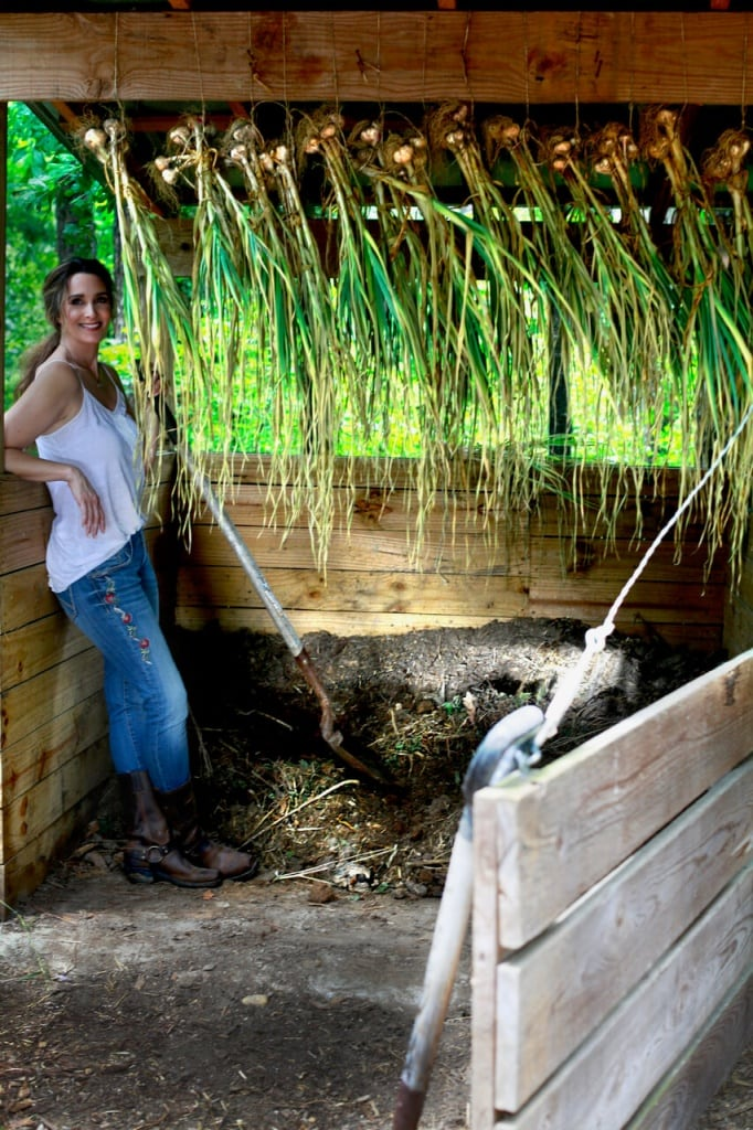 Stacy lyn compost garlic garden