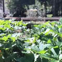 rows of plants in stacy lyn harris's summer garden