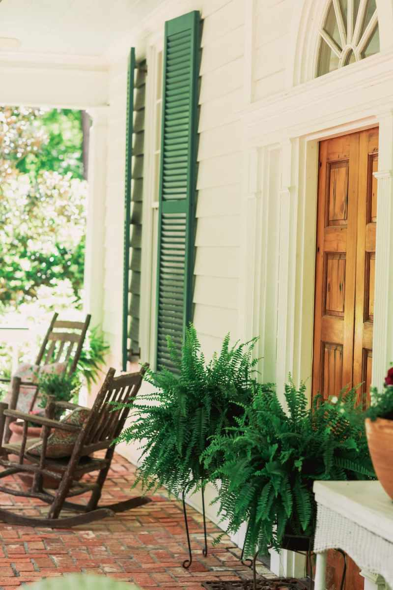 Front porch ferns by the door
