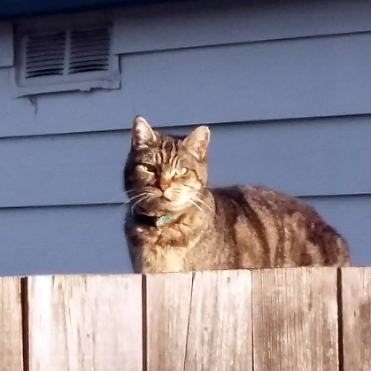 Rico on our fence