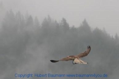 Flugshow-Burg-Hohenwerfen-003