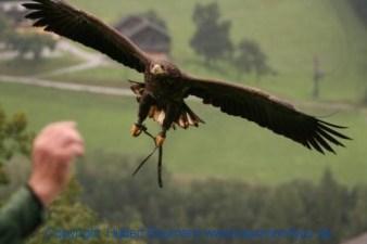 Flugshow-Burg-Hohenwerfen-008