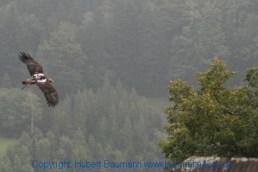 Flugshow-Burg-Hohenwerfen-016