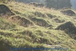 Großarl - auf dem Weg zur Kreealm 012