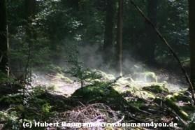 Spessart Herbstnebel 014