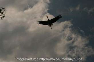 Störche in Salem - Bodensee
