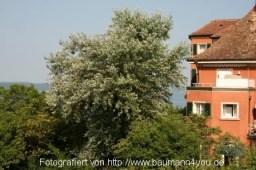 Landhaus Ödenstein