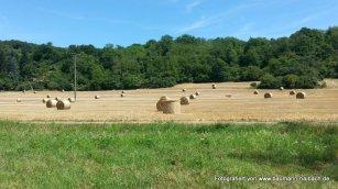 Ernte (Aufnahme auf dem Feld bei Kleinwallstadt)