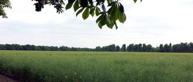 """Zustand des möglichen Baufeldes - Süd des """"Blankenburger Süden"""""""