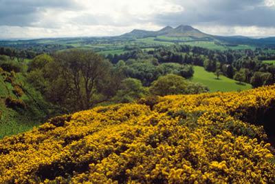 Westwood Whisky - Eildon Hills