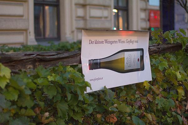 Wiens kleinster Weingarten, Schwarzenbergplatz
