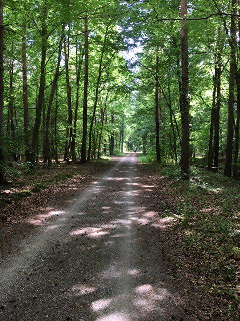 Fahrradweg im Wald bei Karlsruhe
