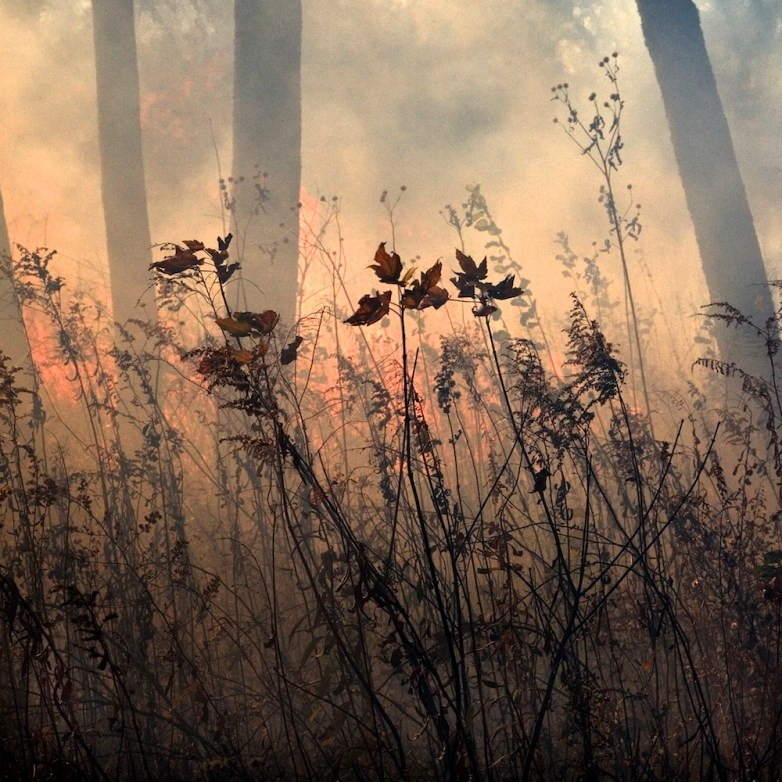 Burn 19 © Jane Fulton Alt
