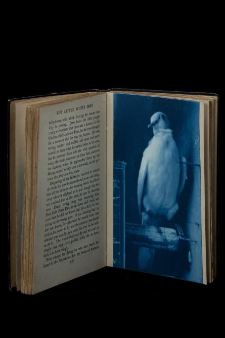 Little White Bird 4 © Jesseca Ferguson