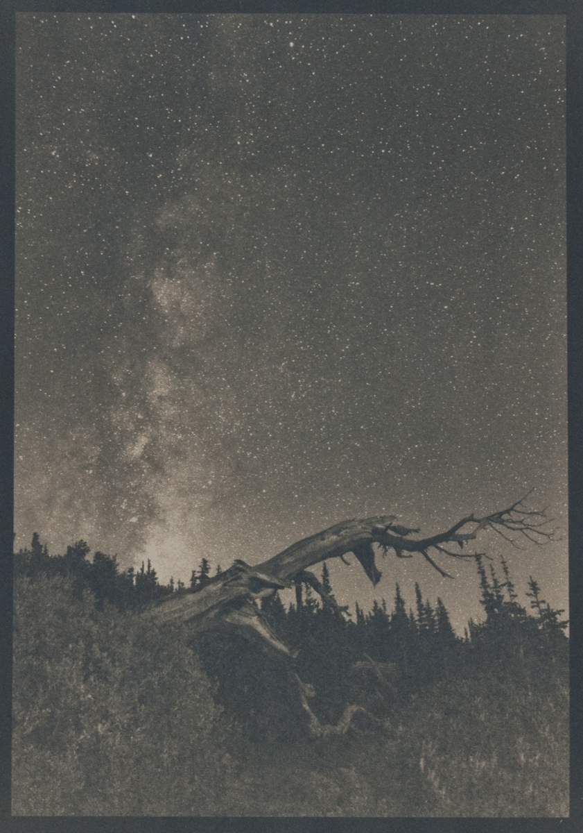 Bristlecone © Denis Roussel