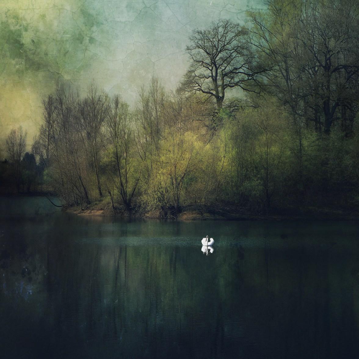 Swan Lake © Bernd Webler