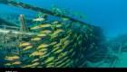 Vivaneaux (Lutjanus kasmira) sur une épave