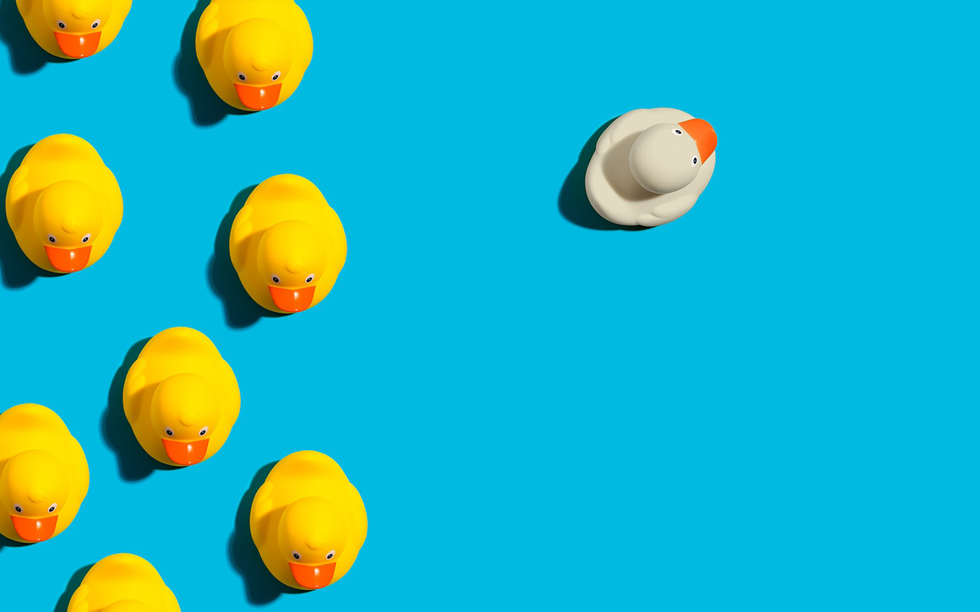 On a blue background, a group of yellow rubber ducks are on the left and on the right there is one white duck facing toward the outside of the frame.