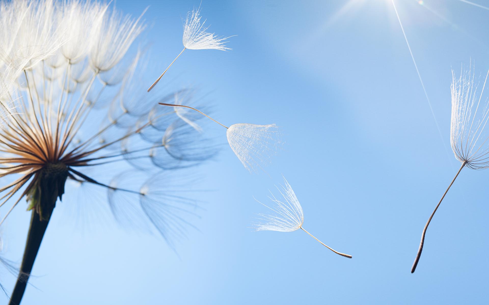 A Guided Meditation for Kids - flying dandelion seeds on a blue background