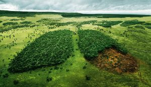 An artist's impression of deforestation, showing woodlands shaped as a pair of lungs - one of which has been logged for wood in its lower section and now just shows the bare earth.