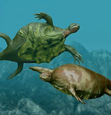 An artist's impression of Odontochelys Semitestacea - an ancient toothed turtle with a half shell dating from the Late Triassic period.