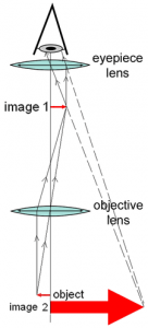 A simple diagram showing the working principle and the path of light within a compound light microscope.