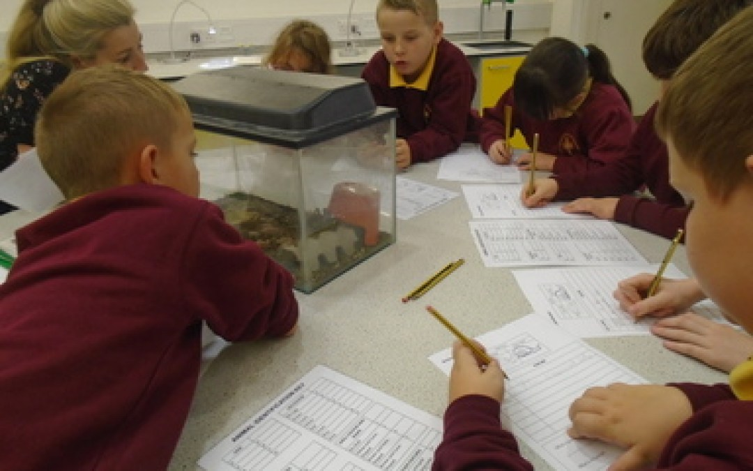 Year 4 Habitats Workshop
