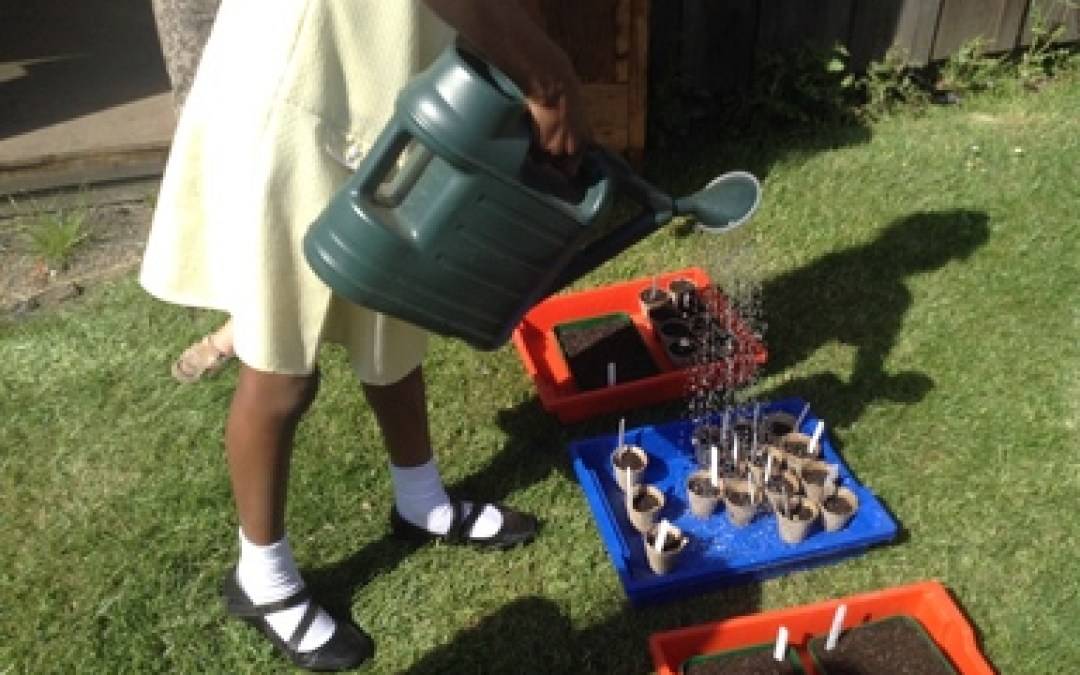 Gardening @ St. Aidan's