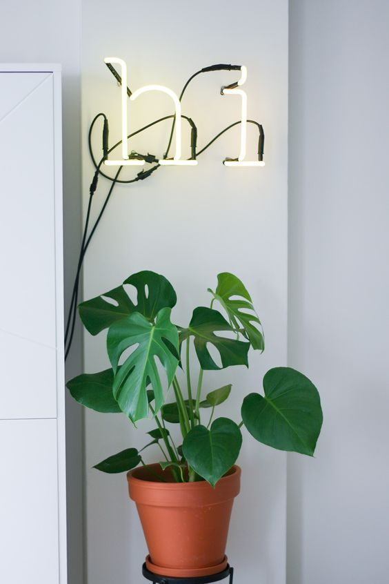 neon-light-hi-green-plant