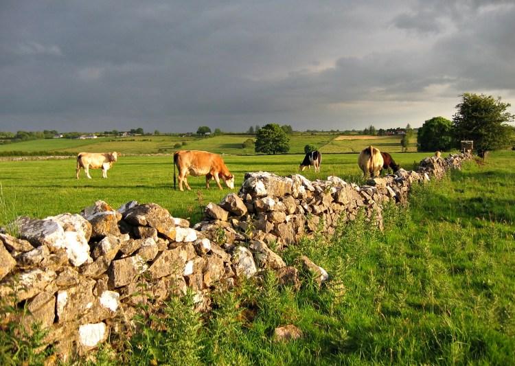 CowFieldRoscommon