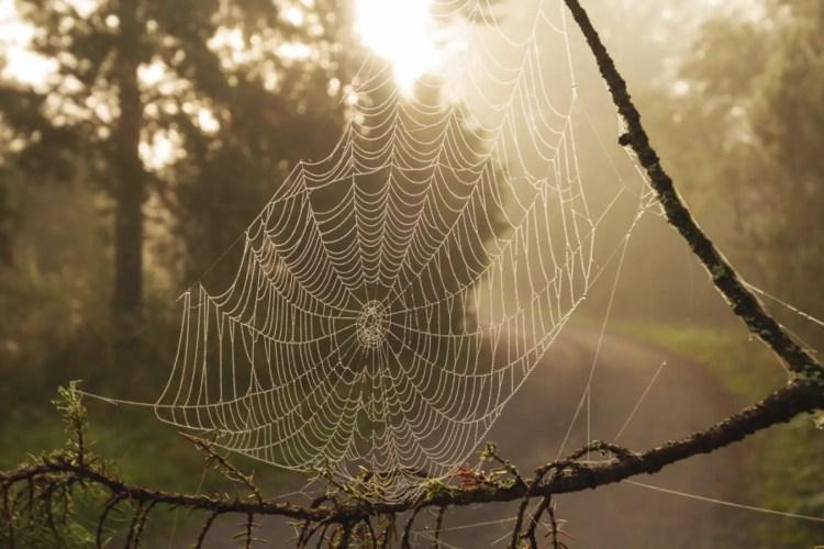 spiderweb_by_antz0-d83n43l