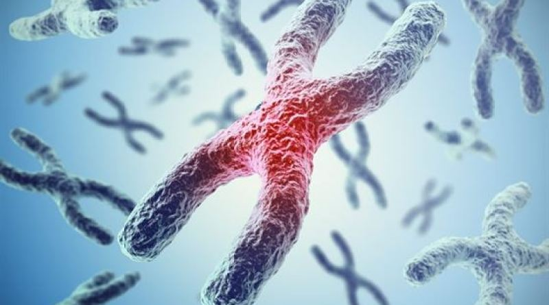 Teoria Cromossômica da Herança