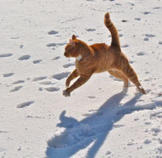 George dancing in the sun
