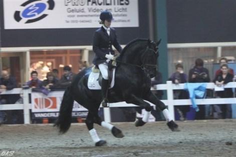 Thys fan Fjildsicht - Jonge friese paarden met dressuuraanleg - hengsten/ruinen