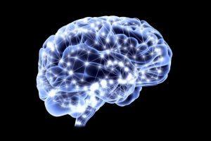 varie_cervello