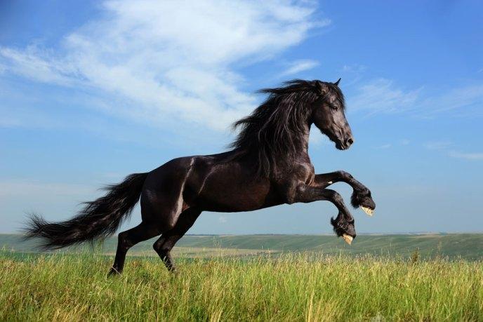 11318g-que-significa-sonar-caballos
