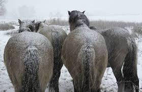 Caballos calentandose