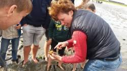 Uns wurden verschieden Krabbenarten erklärt
