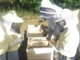 Ist schon cool was die Bienen so treiben