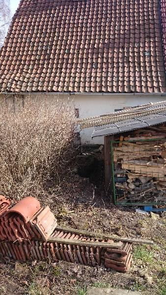 Projekt Heim Heckenschnitt15 (1)